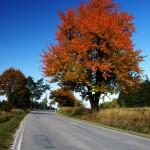 Třešeň poblíž Větrného Jeníkova v podzimních barvách