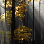 Protisvětlo v podzimním lese