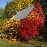 Podzimní zahrada