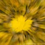 Abstraktní podzimní listy