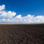 zorané pole v mongolské stepi