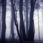 Zamlžený podzimní les